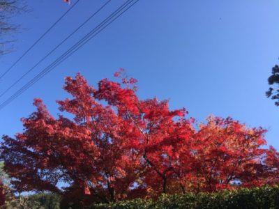 真っ赤に色づく紅葉が美しい南禅寺前