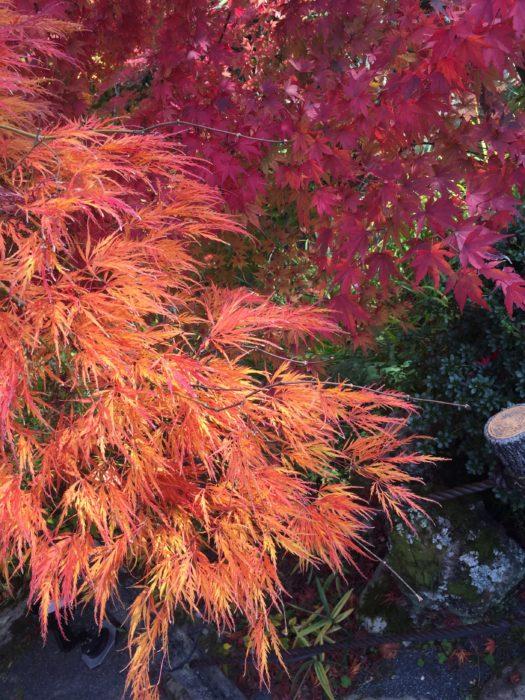 永観堂のキレイな紅葉