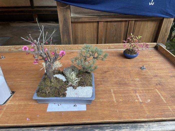 展示されていた盆栽